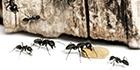 Zeg nee tegen mieren